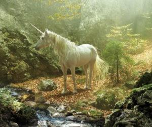 Unicorn Reality